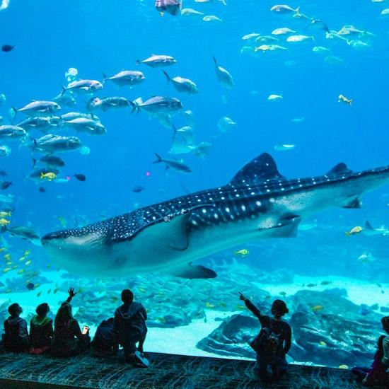 Georgia Aquarium Admission