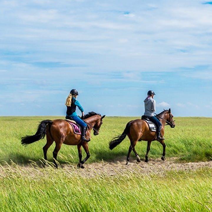 Enoturismo com passeio a cavalo: visita a adega e almoço