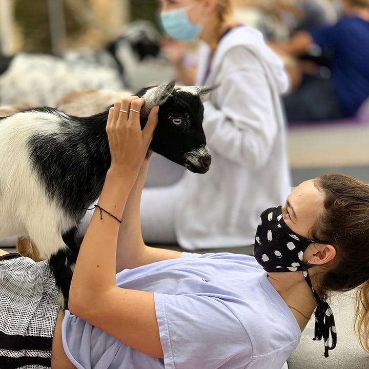 Mini Goat Yoga: Play with Baby Goats, Chickens and Pigs!