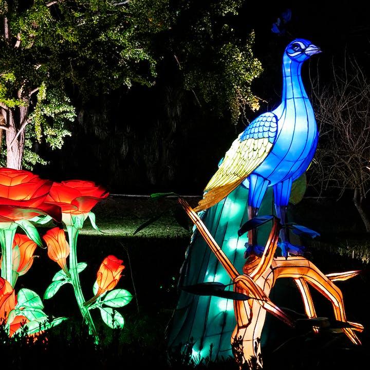 Magical Garden Belém: espetáculo de luzes noturno by Ocubo
