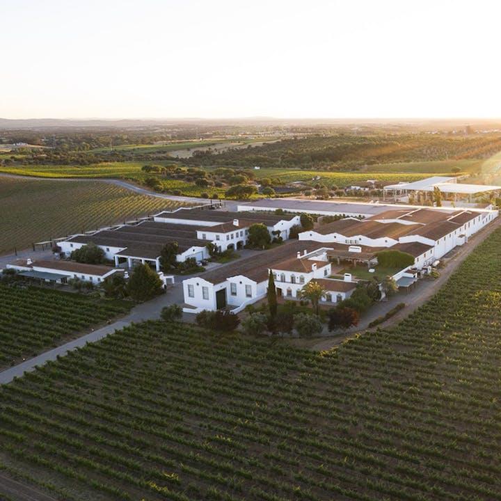 João Portugal Ramos: visita às vinhas e adega com prova premium