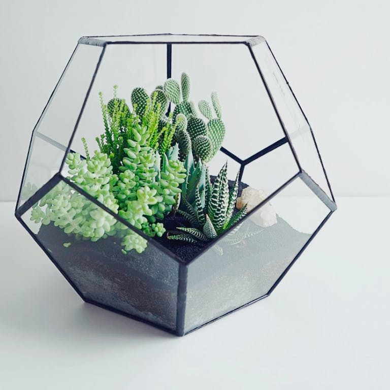 Succulents Galore Make Your Own Green Terrarium Class Fever