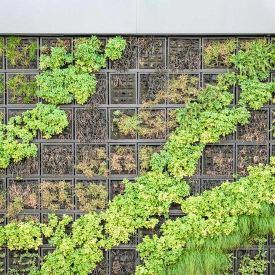 Curso online de iniciação à jardinagem vertical