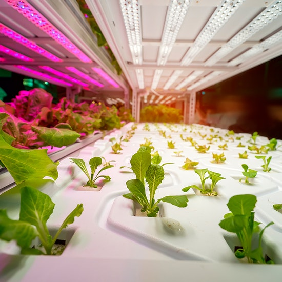 Project Plant: Farm-to-Table Pizza Experience by Samsung