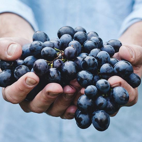 Curso online para elaborar tu propio vino  y visita a bodega
