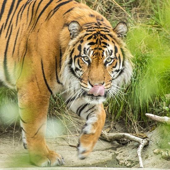 ZSL London Zoo Day Visit