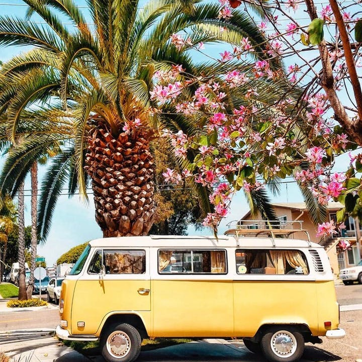 Sonoma Wine Country Tour in a Vintage VW Bus! - #1 Rated Wine Tour in San Francisco