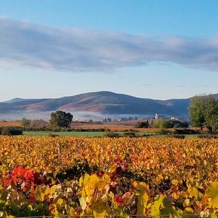 Dégustation de vins et fromages au Domaine Brisson