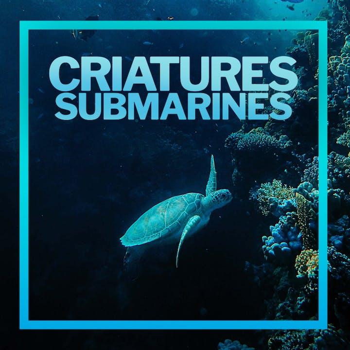 Criaturas submarinas: una aventura al fondo del mar en el Poble Espanyol